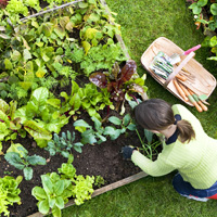 Garden Maintenance Maida Vale