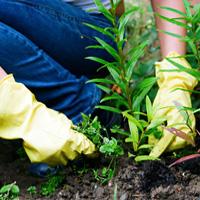 Weeding & Pruning Maida Vale